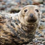 Seal Pup Spotting